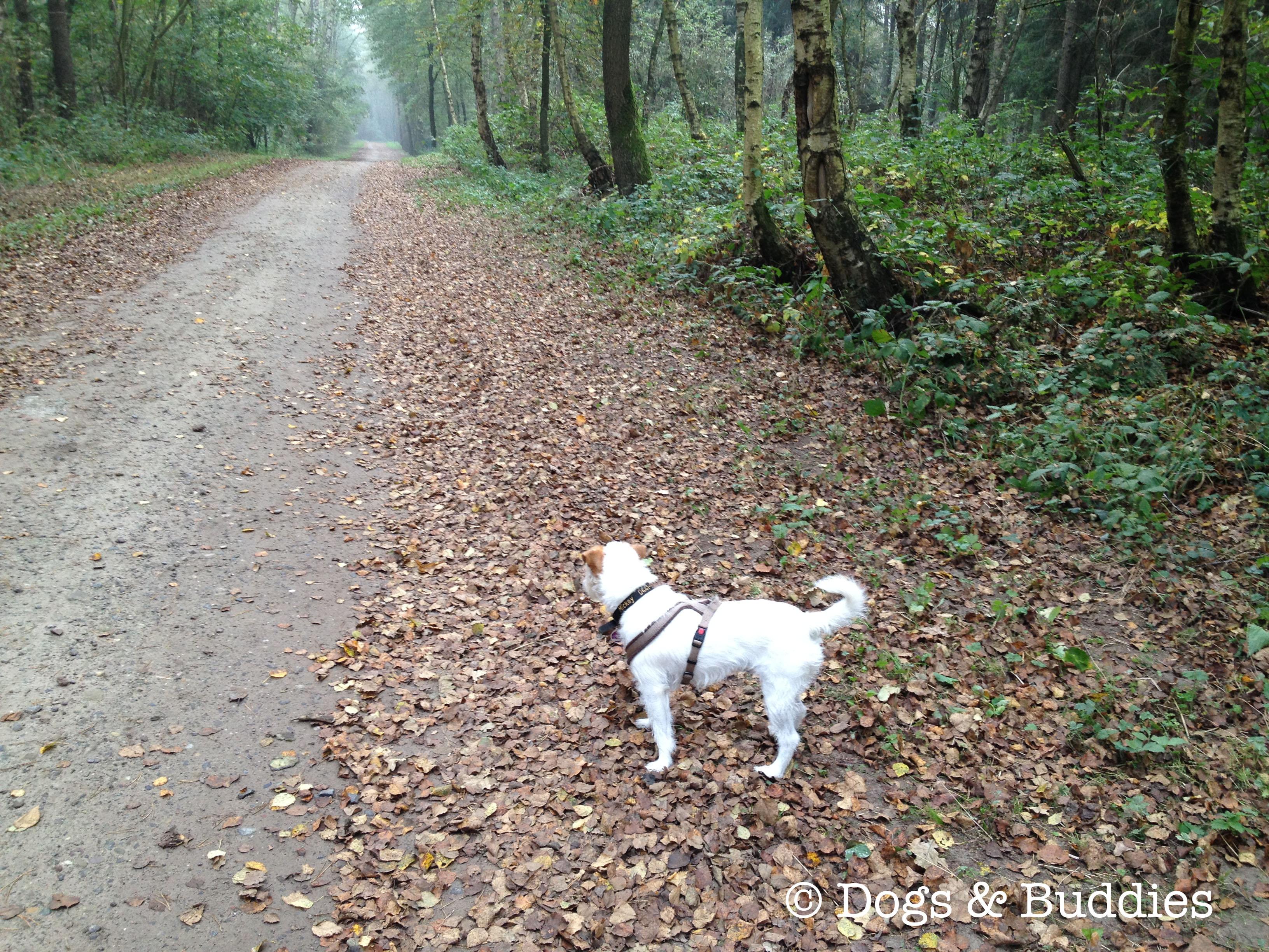 Spaziergang im Wäldchen